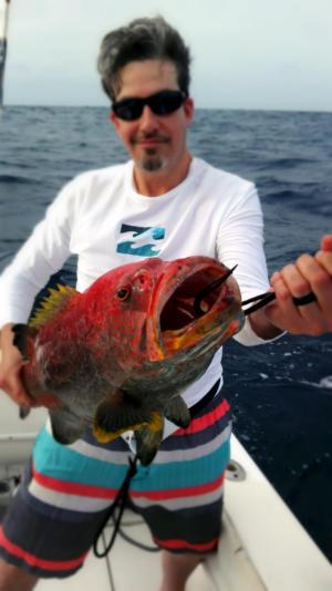 yellowfin grouper grenadines