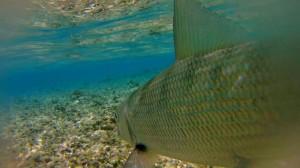 flyfishingunion9